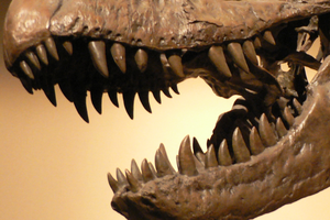About Dinosaur Teeth