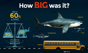 Megalodon Size: How Big Was The Megalodon Shark?