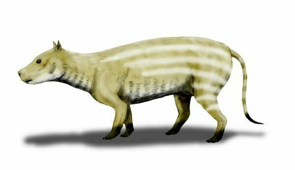Artists reconstruction of Merycoidodon.  By Nobu Tamura (http://spinops.blogspot.com) Creative Commons License