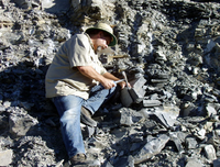 Trilobites being collected in the Wheeler Shale.