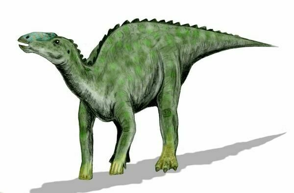 Artist reconstruction of Kritosaurus