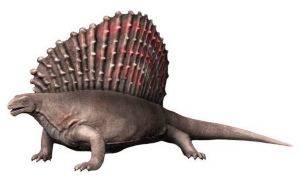 An artists reconstruction of Edaphosaurus.  By Nobu Tamura, Creative Commons License