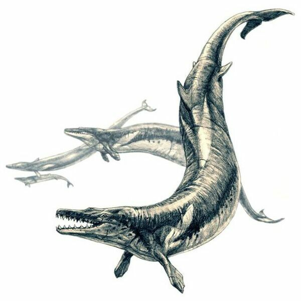 An artists rendering of a Basilosaur.  Drawing by Pavel Riha. 