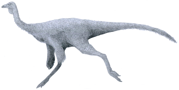 An artists rendering of Ornithomimus.  Creative Commons License, By Tom Parker