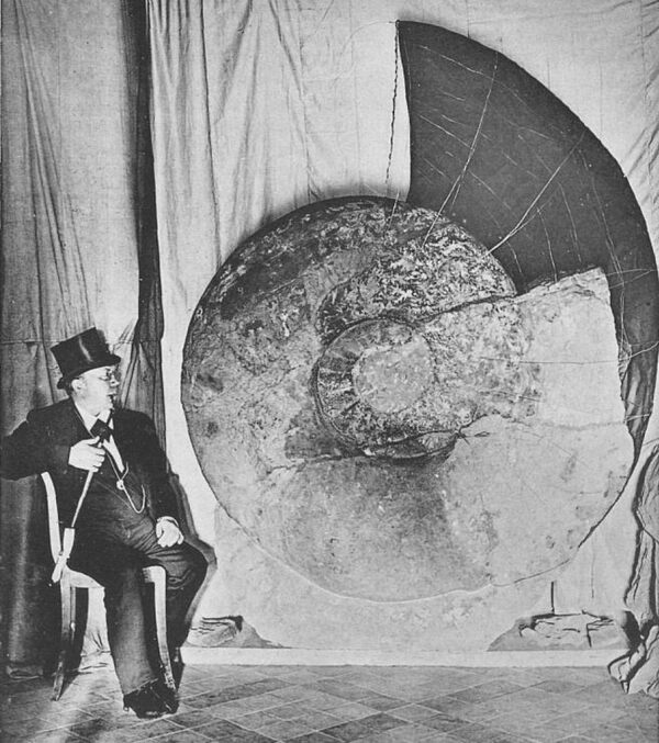 The massive German ammonite found in 1895 showing how the incomplete living chamber would have extended.