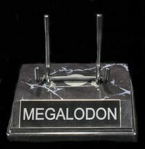 "Custom ""Megalodon"" Display Stand - For Teeth 4 1/2""+"