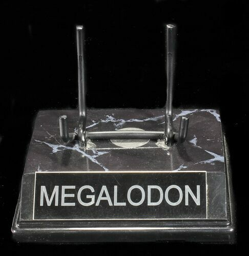 "Custom ""Megalodon"" Display Stand - For Teeth 4 1/2""+ - Photo 1"