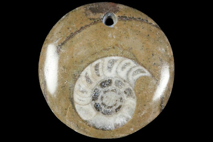 Fossil Goniatite Pendants - Photo 1