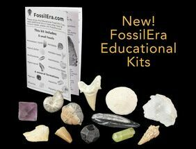 12 Piece Educational Fossil-Mineral Kit