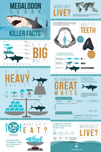 "24x36"" Megalodon Infographic Poster (Matte)"