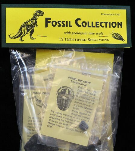 12 Specimen Fossil Collection - Photo 1