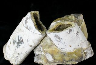 Large Crystal Filled Baculites Fossil - South Dakota For Sale, #22799