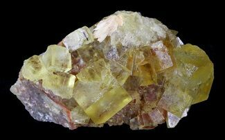 "2.75"" Lustrous, Yellow Cubic Fluorite Crystals - Morocco For Sale, #32306"