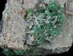 "2.75"" Green Fluorite On Druzy Quartz - Colorado - #33358-1"