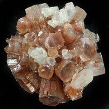 Aragonite - Fossils For Sale - #37323