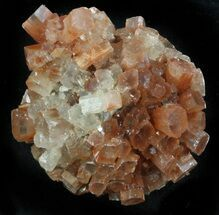 Aragonite - Fossils For Sale - #37335