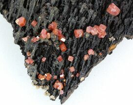 "2.4"" Red Vanadinite Crystals Manganese Oxide - Morocco  For Sale, #38495"