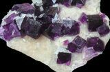 "3.7"" Dark Purple Cubic Fluorite on Quartz - Exceptional! - #39004-1"