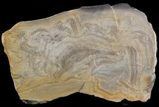 Stromatolite - Fossils For Sale - #40122