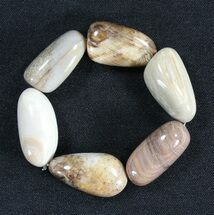 Polished Oregon Petrified Wood Bracelet For Sale, #40808