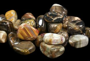 Bulk Tumbled Petrified Wood - 10 Pack For Sale, #41594