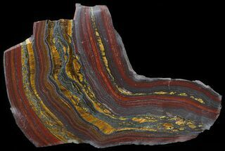 "Buy 4.4"" Polished Tiger Iron Stromatolite - (2.7 Billion Years) - #42559"