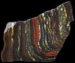 "4.9"" Polished Tiger Iron Stromatolite - (2.7 Billion Years) For Sale, #42563"
