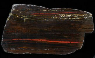 Tiger Iron Stromatolite - Fossils For Sale - #42603