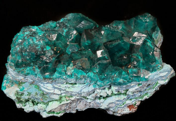 "2.3"" Gemmy Dioptase Cluster (Large Crystals) - Namibia"