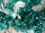 "2.48"" Gemmy Dioptase Cluster on Calcite - Kazakhstan - #44659-1"