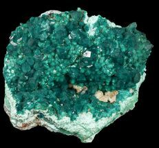 "Buy 2.40"" Dark Green Dioptase Cluster on Plancheite - Congo - #45301"
