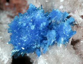 Vibrant Blue Cavansite Cluster on Stilbite - India For Sale, #45875
