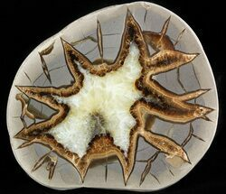 Septarian - Fossils For Sale - #45909