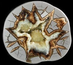 "4.2"" Beautiful Septarian Geode (Half) - Utah For Sale, #45914"