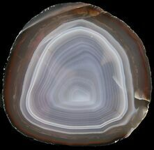 "Buy 5.7"" Polished Brazilian Agate Slice - #46078"