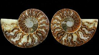 "3.7"" Sliced Fossil Ammonite Pair - Agatized For Sale, #46496"