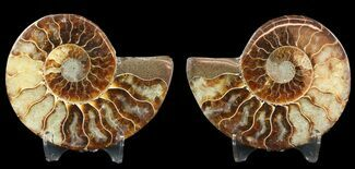 "3.35"" Sliced Fossil Ammonite Pair - Agatized For Sale, #46514"