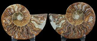 "Buy 3.15"" Sliced Fossil Ammonite Pair - Agatized - #46519"
