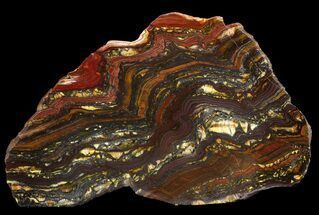 "Buy 6"" Polished Tiger Iron Stromatolite - (2.7 Billion Years) - #46618"