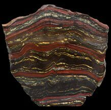 "Buy 6.1"" Polished Tiger Iron Stromatolite - (2.7 Billion Years) - #46633"