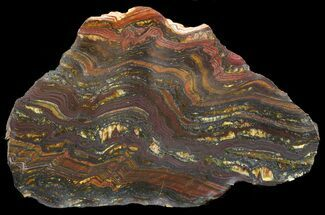 "5.1"" Polished Tiger Iron Stromatolite - (2.7 Billion Years) For Sale, #46811"