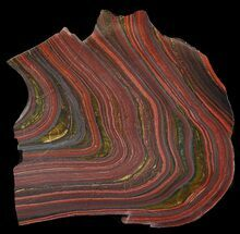 "Buy 5.5"" Polished Tiger Iron Stromatolite - (2.7 Billion Years) - #46813"