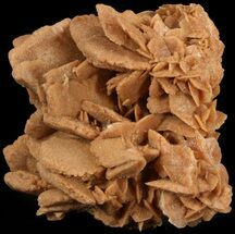 "4.7"" Desert (Selenite) Rose - Sahara Desert For Sale, #47141"