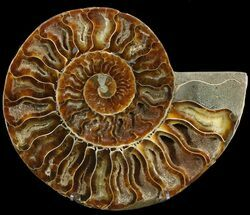 "6.6"" Cut Ammonite Fossil (Half) - Agatized For Sale, #47702"