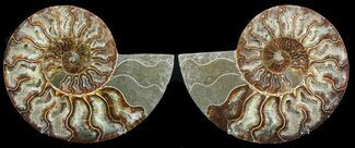 "Buy 6"" Cut & Polished Ammonite Pair - Agatized - #47710"