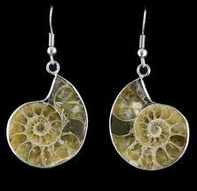 Fossil Ammonite Earrings - 110 Million Years Old For Sale, #48851