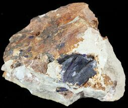 "2.4"" Large Azurite Crystals on Matrix - Morocco For Sale, #49451"