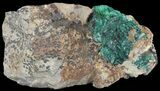 "3.1"" Fibrous Malachite Crystals on Matrix - Morocco - #49455-2"