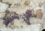 Purple/Yellow Cubic Fluorite & Calcite on Matrix - Illinois - #32189-1