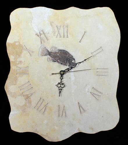 "16"" Tall Clock With Cockerellites Fish Fossil - Wyoming"